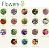 Flower Seeds Choices